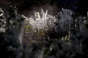 Icicles on branch during winter storm - Mississippi Free Press