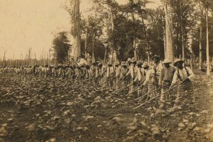 Black and white photo of Black prisoners in striped pants, hoeing a field in